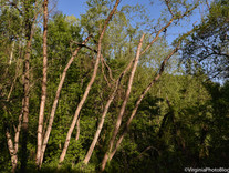 Summer 2021: Trees In the Woods