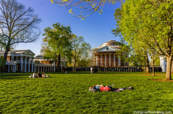 The_Lawn_0002