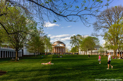 The_Lawn_0003