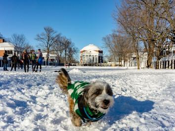 A Walk Around The Lawn: Winter