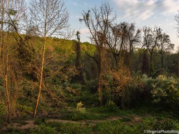 Spring 2021: Pathways Through the Woods