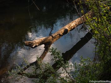 Spring 2021: A Walk Along The Creek (2)