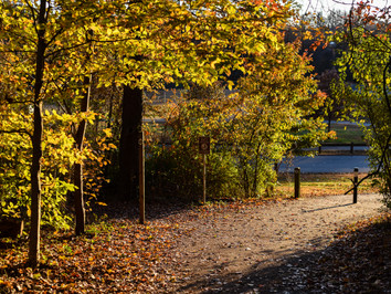 Pathways Around Town: Fall Colors
