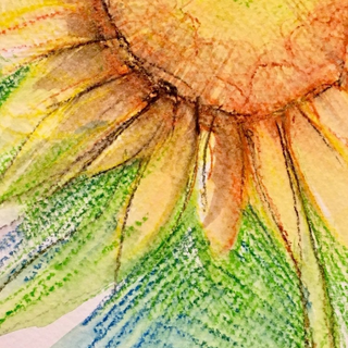 Sunflower close-up by Kirsteen Lyons Benson