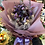 Thumbnail: 乾花花束 Dry Flower Bouquet A