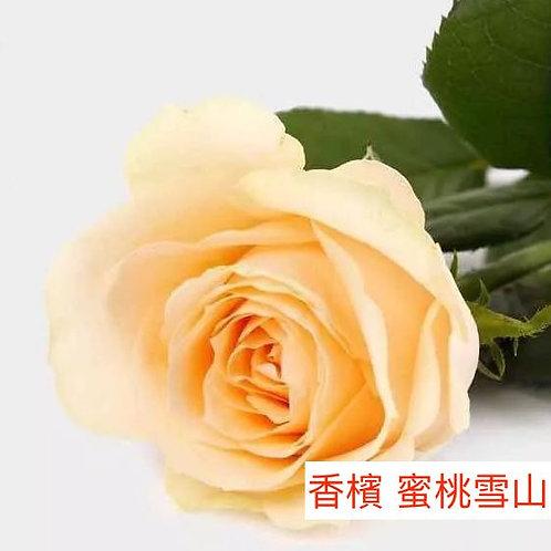 玫瑰 香檳 蜜桃雪山 產地昆明 1枝