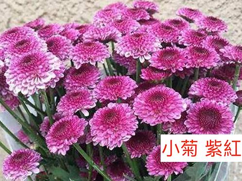 多頭小菊 紫紅色 產地昆明 8枝送2枝