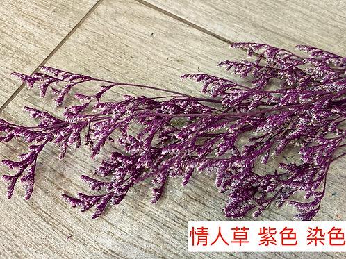 情人草 紫色 產地昆明 0.5KG