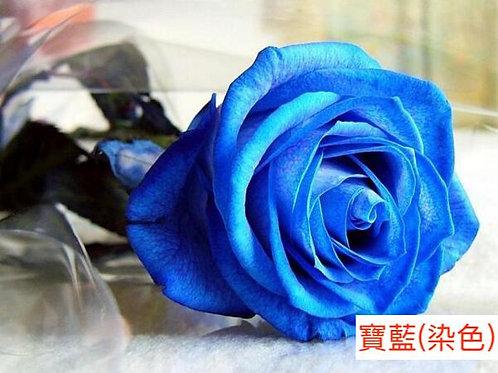 玫瑰 寶藍 染色 18枝送2枝共20枝