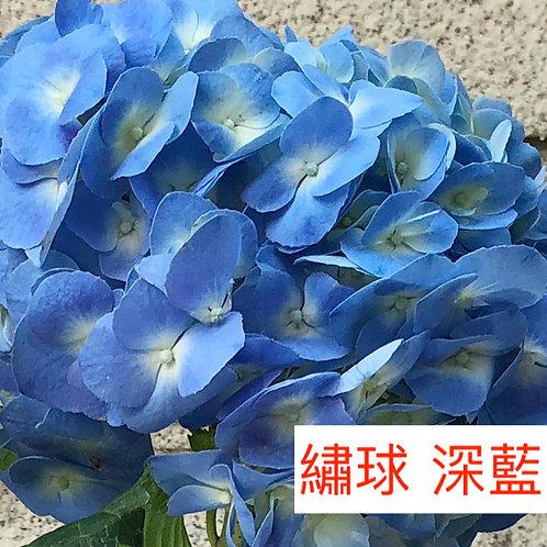 繡球 深藍 產地昆明 一個