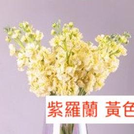 紫羅蘭(麝香花)黃色 產地昆明 8枝送2枝