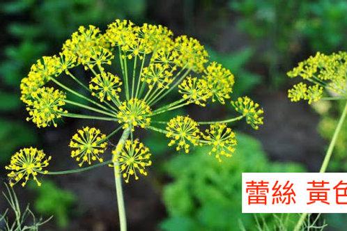 飛香(蕾絲)黃色 產地昆明 8枝送2枝