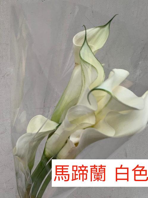 馬蹄蘭 白色 產地昆明 8枝送2枝