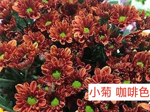 多頭小菊 咖啡色 產地昆明 8枝送2枝