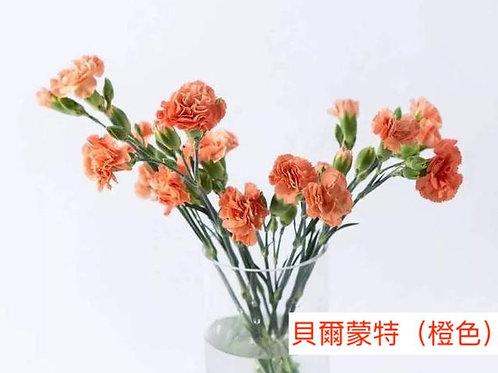 多頭康乃馨 (小丁)貝爾蒙特(橙色)產地昆明 18枝送2枝共20枝
