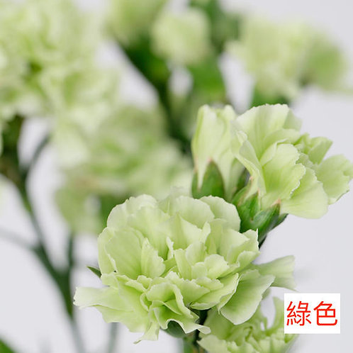 多頭康乃馨 (小丁)綠色 產地昆明 18枝送2枝共20枝