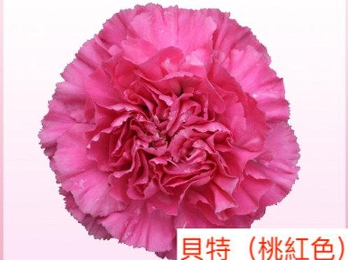 康乃馨(大丁)貝特(桃紅色)產地昆明 18枝送2枝共20枝