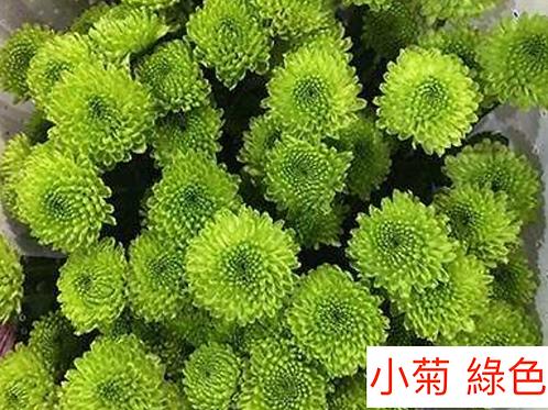 多頭小菊 綠色 產地昆明 8枝送2枝