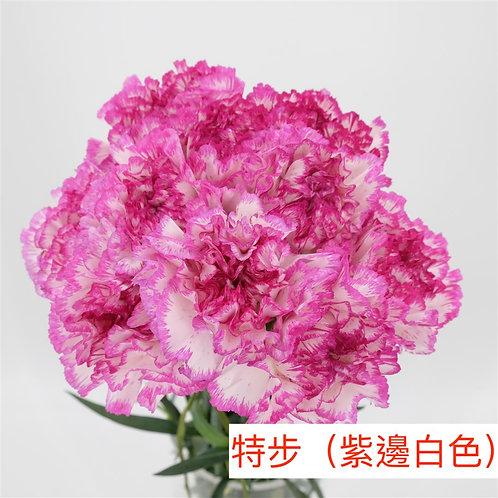 康乃馨(大丁)特步(紫邊白色)產地昆明 18枝送2枝共20枝