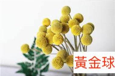 黃金球 黃色  20枝