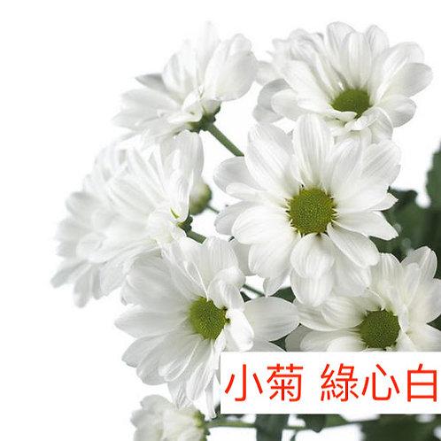 多頭小菊 綠心白色 產地昆明 8枝送2枝
