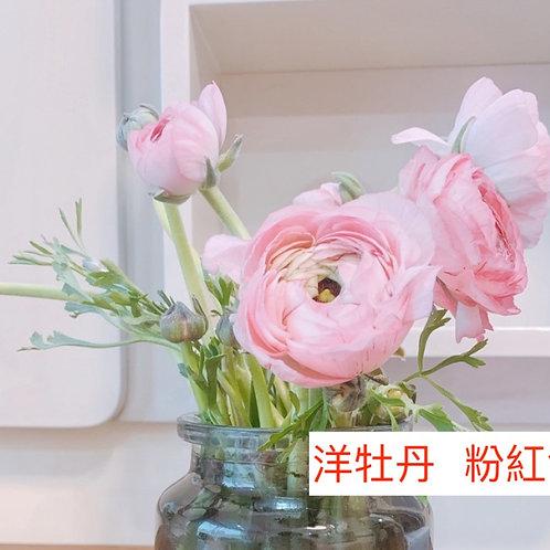 洋牡丹 粉紅色 產地昆明 8枝送2枝