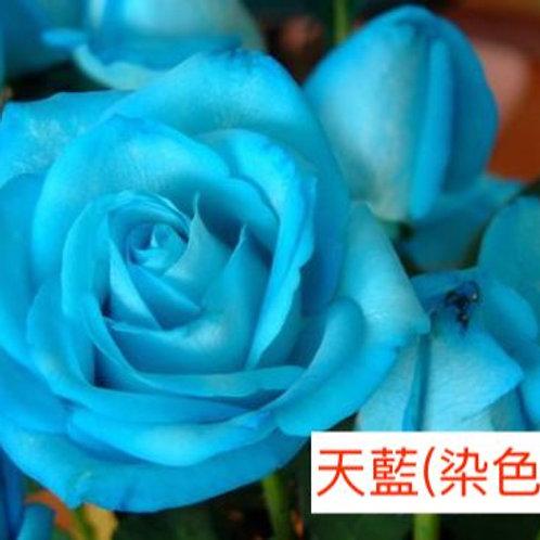 玫瑰 天藍 染色 18枝送2枝共20枝