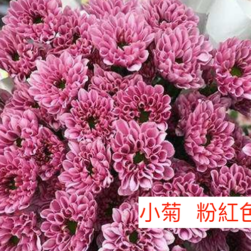 多頭小菊 粉紅色 產地昆明 8枝送2枝