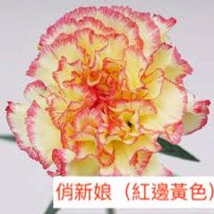 康乃馨(大丁)俏新娘(紅邊黃色)產地昆明 18枝送2枝共20枝