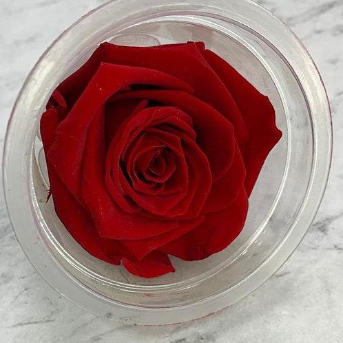 *保鮮花玫瑰 (5-6cm直徑)(紅黃系)