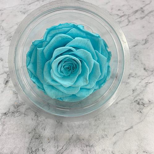 保鮮花玫瑰 (7-8cm直徑)