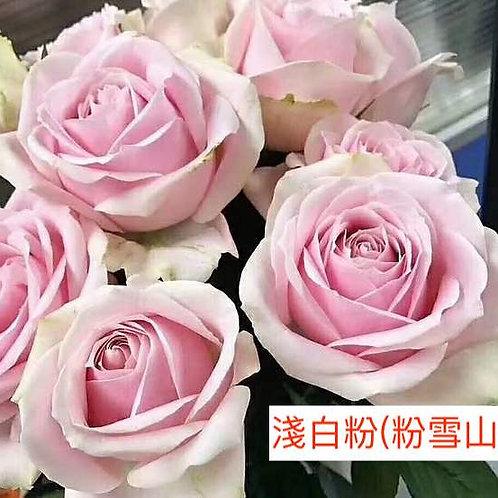 玫瑰 淺白粉 粉雪山 產地昆明 18枝送2枝共20枝