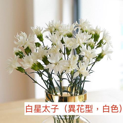 多頭康乃馨 (小丁)白星太子(異花型,白色)產地昆明 18枝送2枝共20枝
