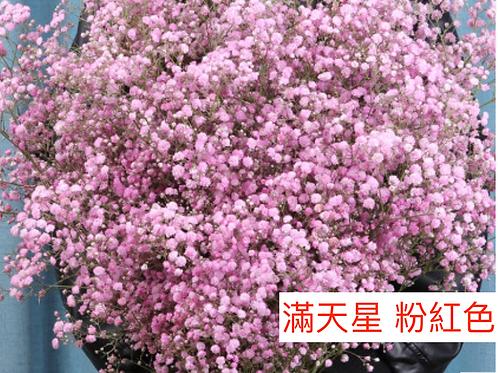滿天星 粉紅色 產地昆明 1KG