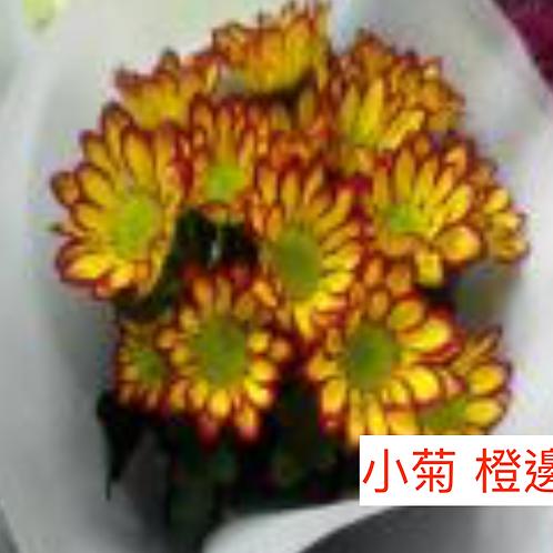 多頭小菊 橙邊 產地昆明 8枝送2枝