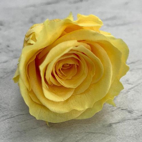 保鮮花玫瑰 (2-3cm直徑)