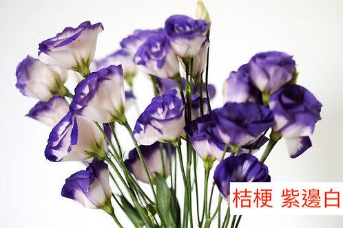 桔梗 紫邊白 產地昆明 8枝送2枝共10枝