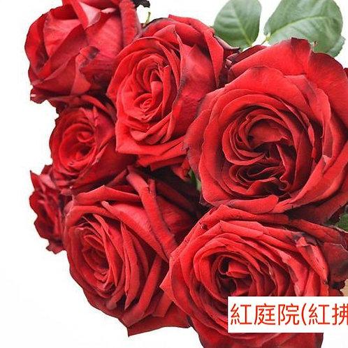 玫瑰 紅庭院 紅拂 產地昆明 18枝送2枝共20枝