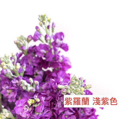 紫羅蘭(麝香花)紫色 產地昆明 8枝送2枝