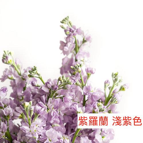 紫羅蘭(麝香花)淺紫色 產地昆明 8枝送2枝