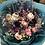 Thumbnail: 乾花花束 Dry Flower Bouquet B