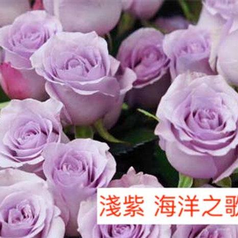 玫瑰 淺紫 海洋之歌 產地昆明 18枝送2枝共20枝