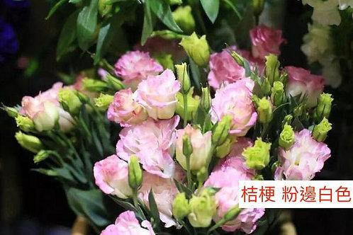 桔梗 粉邊白色 產地昆明 8枝送2枝共10枝