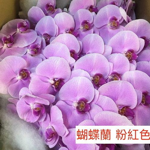 蝴蝶蘭 粉紅色 產地台灣 1枝