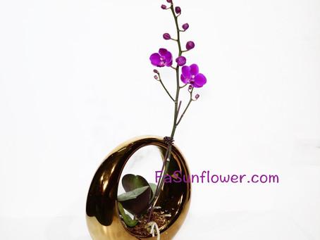 單枝蝴蝶蘭藝術盆栽