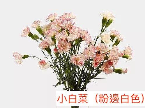 多頭康乃馨 (小丁)小白菜(粉邊白色)產地昆明 18枝送2枝共20枝