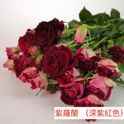 多頭小玫瑰 紫羅蘭 (深紫紅色)產地昆明 8枝送2枝共10枝