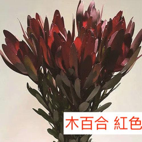 木百合 紅色  5枝