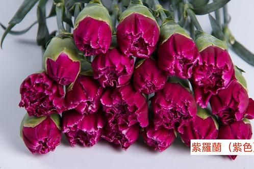 康乃馨(大丁)紫羅蘭(紫色)產地昆明 18枝送2枝共20枝