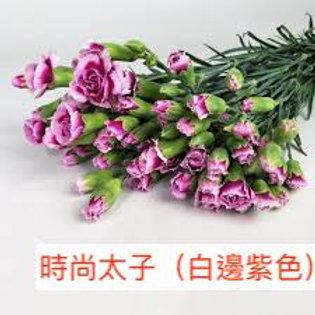 多頭康乃馨 (小丁)時尚太子(白邊紫色) 產地昆明 18枝送2枝共20枝